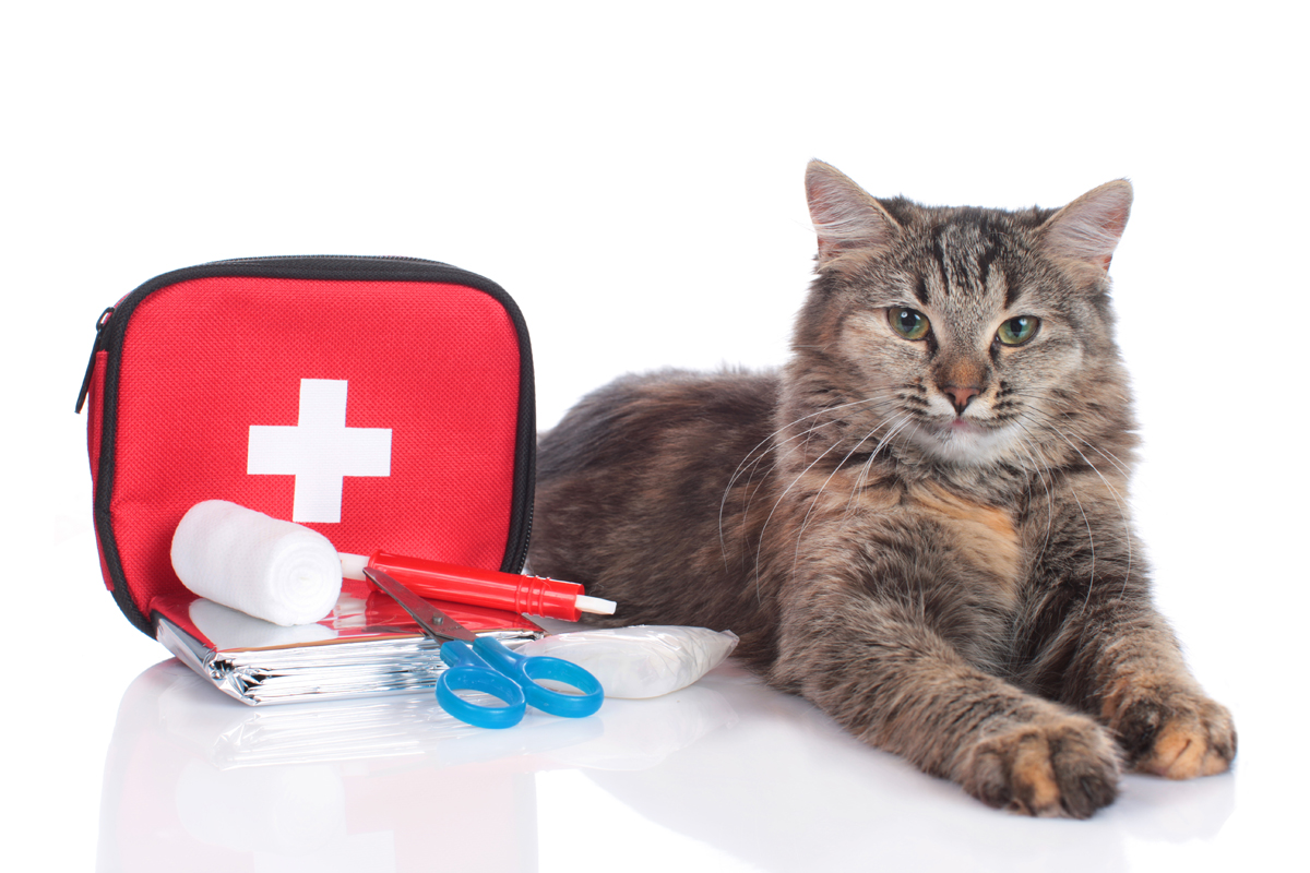 catfirstaid