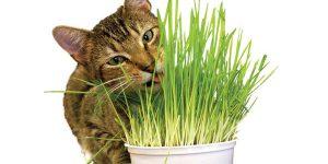 Γατα με catnip