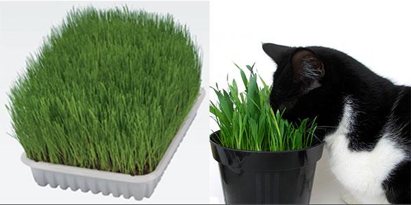 Γάτα με catnip