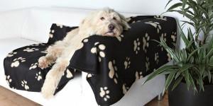 Κουβέρτα σκύλου