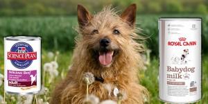 κονσερβες για σκυλους