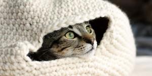 κρεβατια γατας