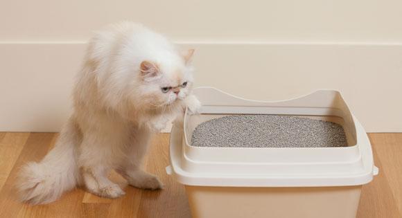How to dispose of cat litter: todocat.com