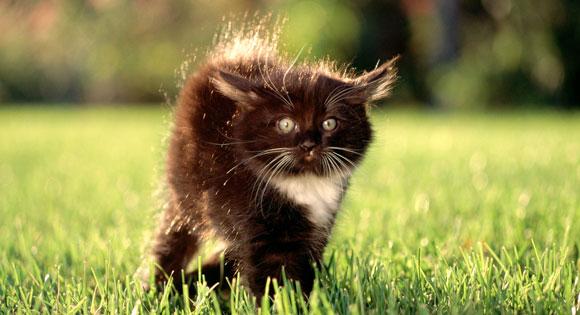 Πώς θα εξημερώσετε ένα άγριο αδέσποτο γατάκι