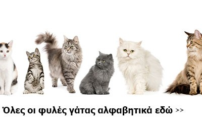 φυλές / ράτσες γάτας