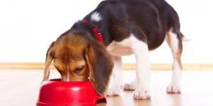 Σκύλος τρώει φαγητό