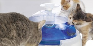Catit-Water-Fountain-2