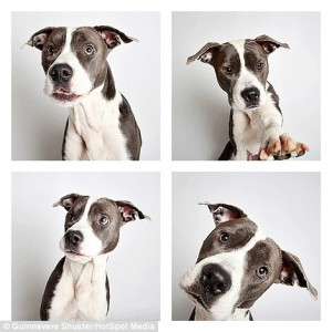23A226B800000578-2856184-Athena_the_pitbull_takes_a_few_shots_before_getting_into_the_swi-31_1417453075420