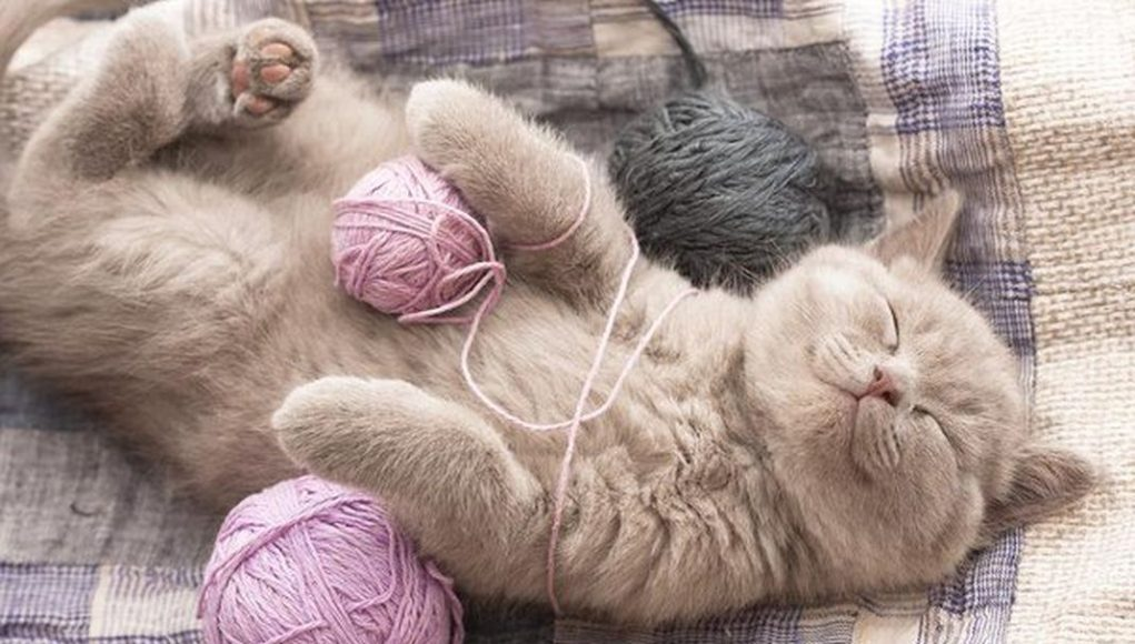 84a0753d2c00 Οι γάτες χωρίζονται σε 5 κατηγορίες χαρακτήρα - katoikidio ...