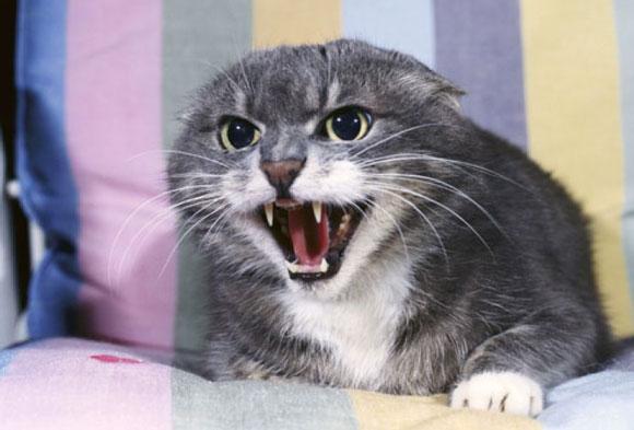 651f4cd21442 Επομένως το καλύτερο που έχετε να κάνετε είναι να της αγοράσετε διάφορα  παιχνίδια γάτας όπως μπαλίτσες ή ποντικάκια ώστε να εκτονώνει επάνω τους  όλο τη ...