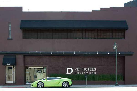 d pet hotel φωτογραφια με σκυλο