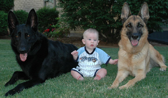 μωρό με δυο λυκόσκυλα