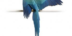 Συμπληρώματα διατροφής πτηνών