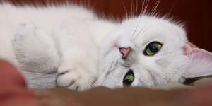 Σπίτι για γάτες