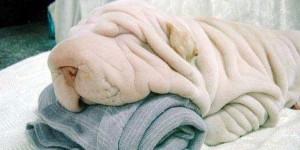 πετσετα για σκυλους