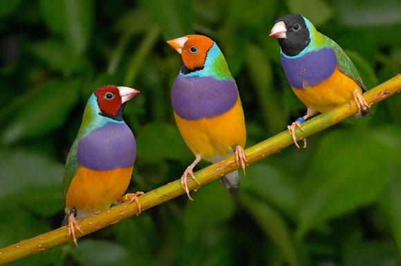 Μεγάλο πουλί δεν χωράει