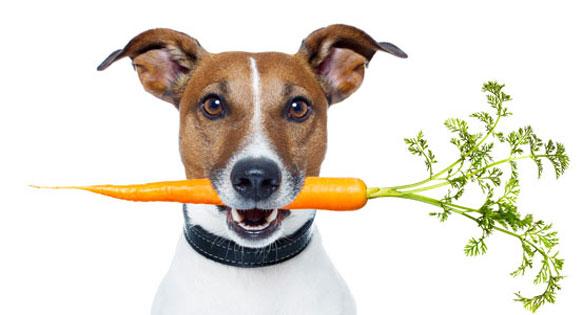 dacf5174db4d Ποια λαχανικά και φρούτα είναι κατάλληλα για το σκύλο μου ...