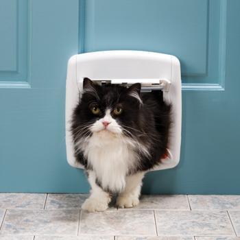 b2edb353baa5 Πορτάκι για γάτες για τις εξόδους του κατοικιδίου σας! - katoikidio ...